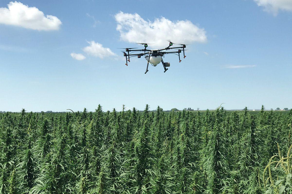 , iUNU and Autogrow are utilizing AI to help cannabis growers