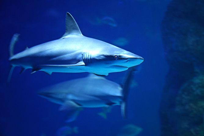 , Shark Bait