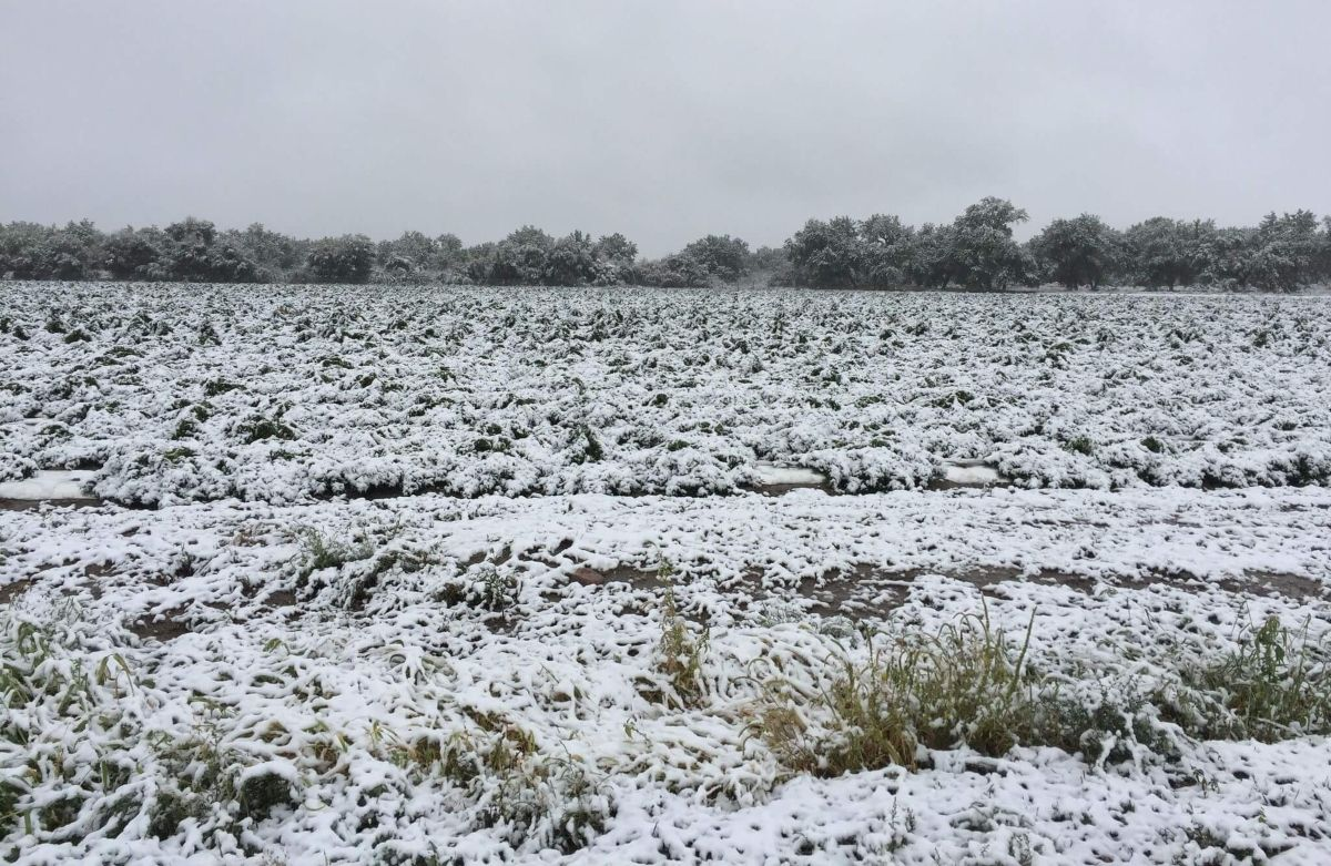Image of snow-covered cannabis fields