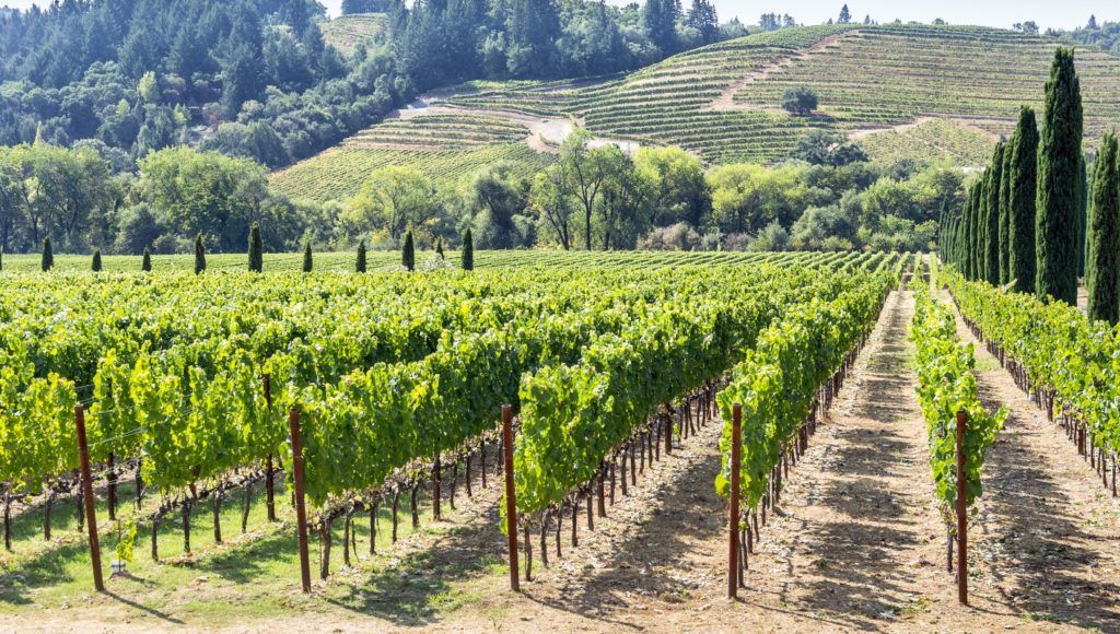 How the new California cannabis appellations law borrows from the wine industry