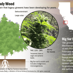 Graphic showing the details of Big Sur Holy Weed.