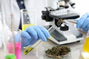 , Proposed pesticide, heavy-metal testing rules in Washington state roil marijuana cultivators
