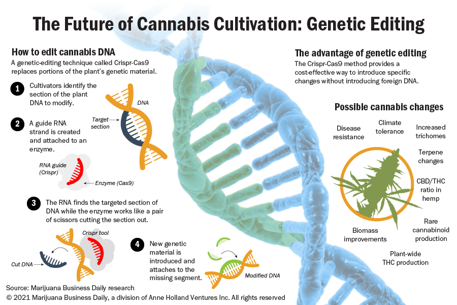 An illustration showing how the Crispr-cas9 technique is being used to edit the cannabis genome.