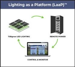 cannabis lighting systems