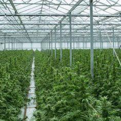 Tilray closes facility, Cannabis producer Tilray shutting 'flagship' facility in Nanaimo