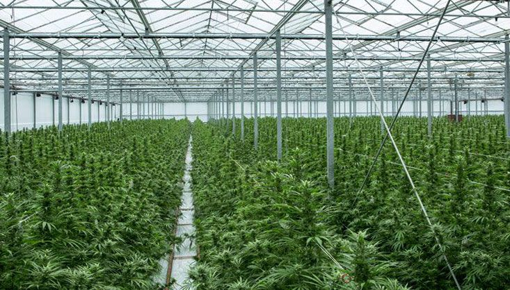 Canadian marijuana lawsuit   Canopy Growth Pharmhouse TerrAscend, Canopy Growth, others formed JV 'solely' to pump marijuana stock, refiled CA$500 million lawsuit alleges