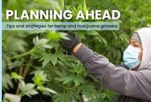 planning ahead cultivation