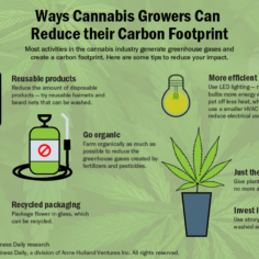 Infographic showing the ways cannabis growers can reduce their carbon footprint