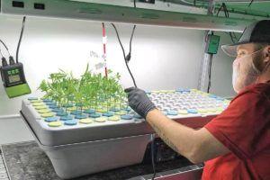 marijuana as medicine, Catering to consumers who use marijuana as medicine