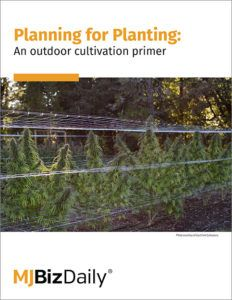 Cover image of the report for cannabis planting featuring an outdoor grow