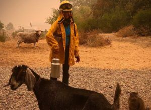 Image of Nikki Charneski milking goats during a California wildfire