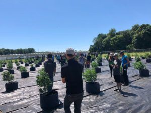 , WeedMD cuts outdoor cannabis output to focus on higher margin categories