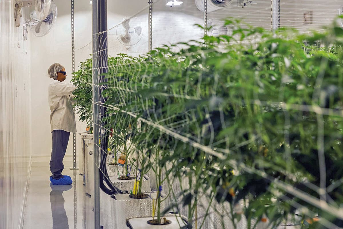 , Executives share strategies for growth in expanding marijuana markets such as Michigan
