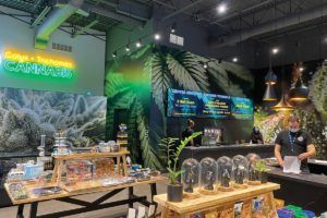 cannabis retail prices, When setting cannabis retail prices, covering expense is priority No. 1