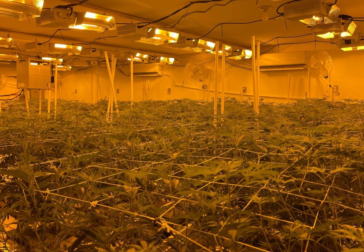 Image of an illegal grow room in California