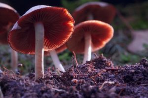 Image of psychedelic mushrooms