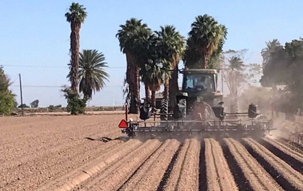California marijuana, hemp industries hail CBD bill passage, but farmers might sue to halt it