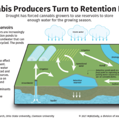 A graphic describing retention reservoirs used in cannabis production.